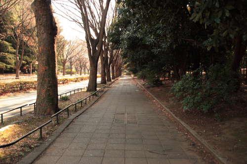 駒沢通りへ向かう歩道。さすがに年末だから人はいませんな。